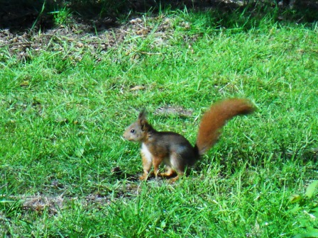 Un petit écureuil qui se baladait devant notre cottage