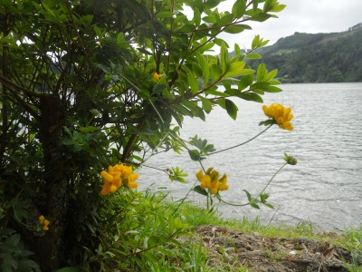 La flore de Sao Miguel aux Açores
