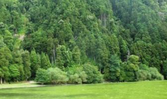 Le lac de Furnas et sa magnifique couleur verte