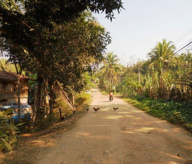 Laos-Campagne (10)